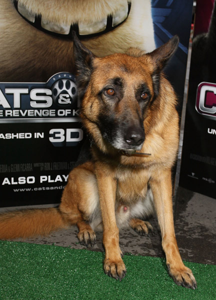 """Flix Movie Theater >> PREMIER: """"Cat's & Dogs Diggs and Kitty Galore"""" – NYC 